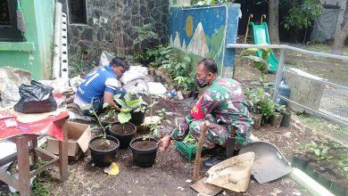 Photo of Babinsa Koramil 06-02/Bogor Selatan laksanakan Pembibitan Tanaman Cabe Untuk Mensukseskan Program Ketahanan Pangan